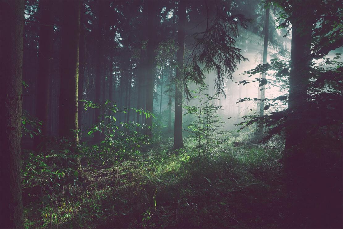 Blog-light-through-forest